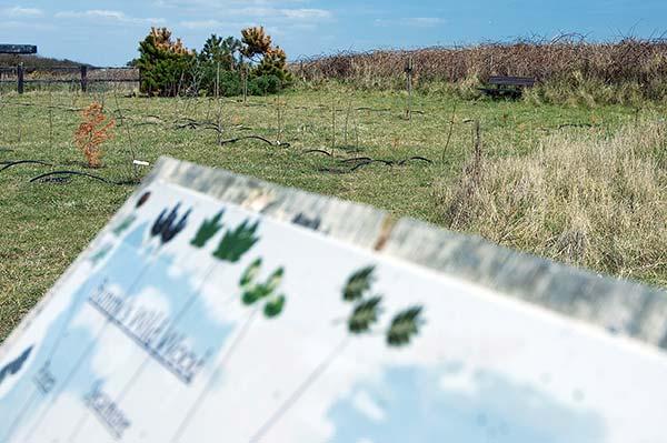 countryside-wardens-tale-suffolk-coast
