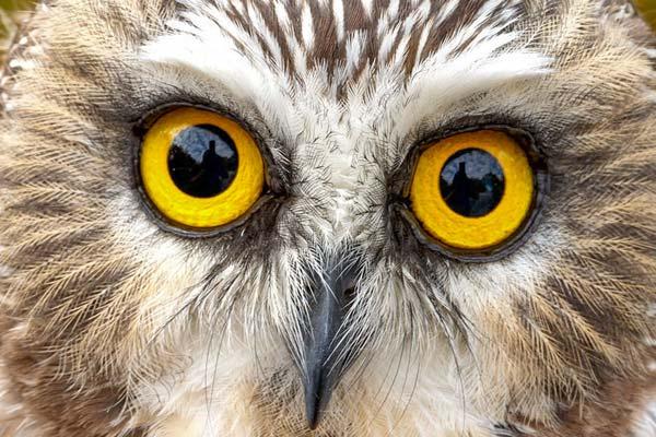 tawny-owl-wardens-tale-suffolk-birds-sizewell-holiday